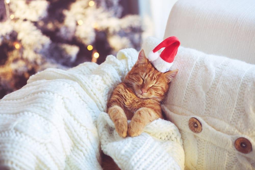 Adventszeit ohne Reue