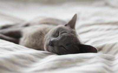 Warum ist guter Schlaf so wichtig?