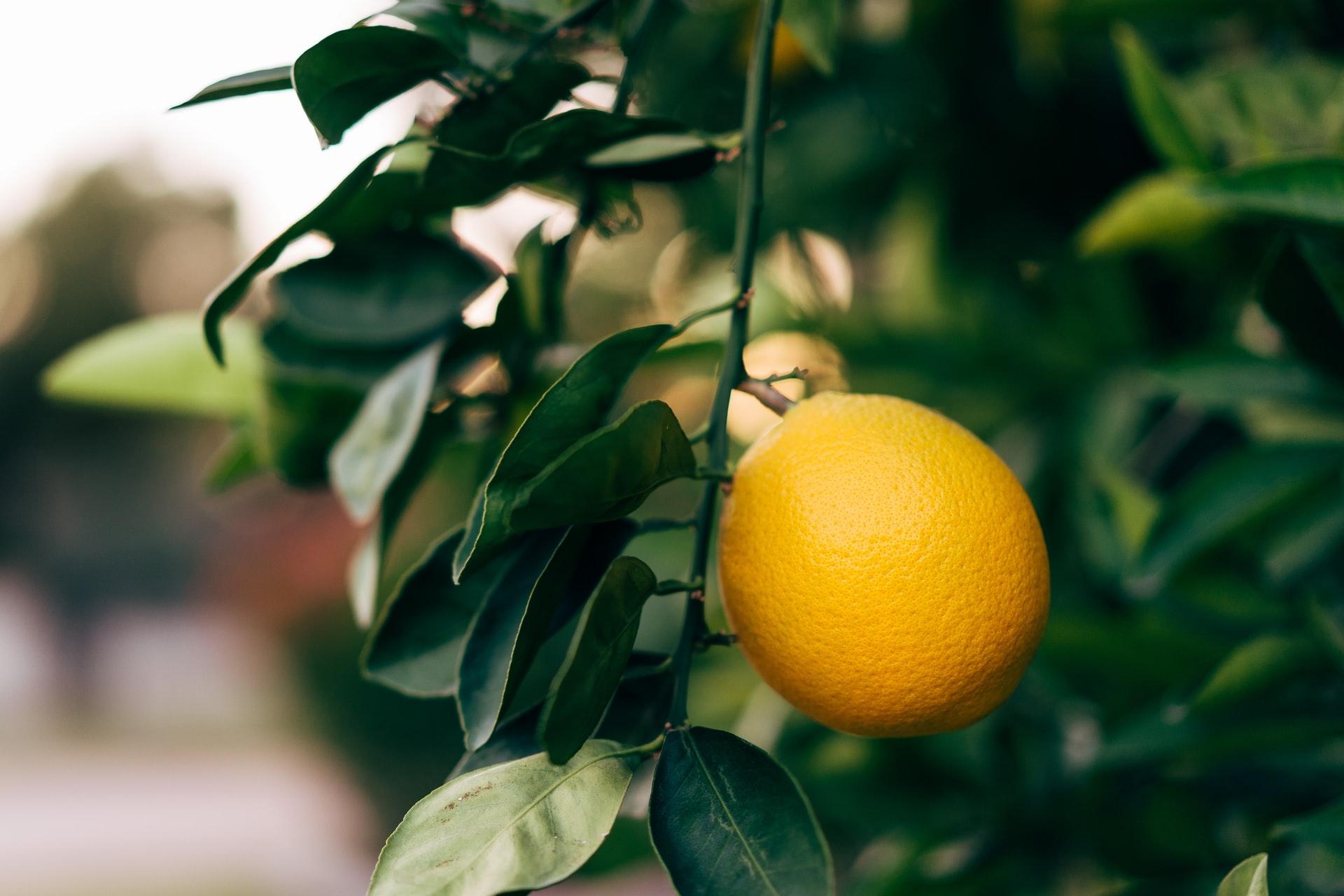 Zitronen Histaminintoleranz